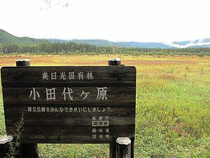 栃木県おすすめ観光スポット 日光国立公園 小田代ヶ原