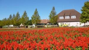 滋賀県おすすめ観光スポット 滋賀農業公園ブルーメの丘