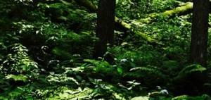 天河神社近くの洞川温泉に癒される!