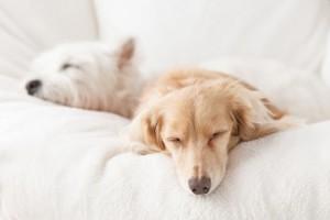 睡眠力の上げ方