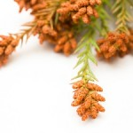 花粉症に効くアロマオイル