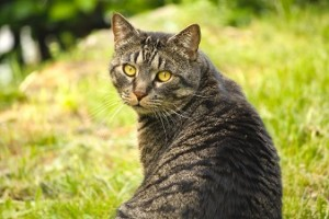 本当は怖い猫背の原因と治し方