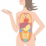 内臓を鍛えてワンランク上の健康美を手に入れる方法